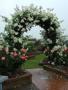 Roses for Beautiful Outdoor Decor, Charming Garden Designs and Backyard Ideas-I would love to wander through these gardens! garden design Roses for Beautiful Outdoor Decor, Charming Garden Designs and Backyard Ideas Rose Garden Design, Climbing Flowers, Garden Arbor, Garden Path, Garden Kids, Garden Boxes, Easy Garden, Water Garden, Garden Arches