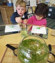observation : Tadpole provocation (by richland academy - link goes to school's main site/page).