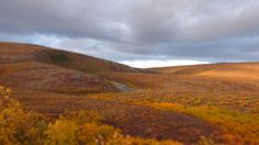About an hours drive from Nome Alaska  Fall colors in the subarctic tundra. [46082592] (OC) #reddit