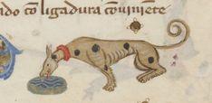 жажда Thirsty fellow @GallicaBnF @laBnF Espagnol 286 XLIIIr Shit Happens, Medieval, Dogs, Pet Dogs, Mid Century, Doggies, Middle Ages