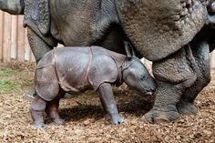 1 more of the baby rhino