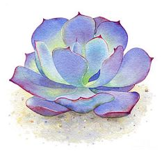 Cactus Painting - Blue Sky Succulent by Laura Nikiel