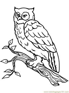 http://www.coloringville.com/images/owl-coloring-pages/owl ...