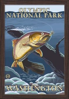 Olympic National Park, Washington - Trout Fishing Cross-Section - Lantern Press Artwork (16x24 Giclee Art Print, Gallery Framed, Espresso Wood), Multi