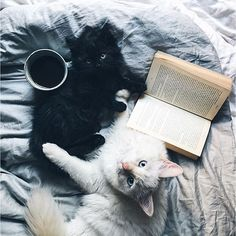 Black and white cats in the bed reading book. Books, cats and coffee. Blue eyed white catBlack and white cats in the bed reading book. Books, cats and coffee. Animals And Pets, Baby Animals, Cute Animals, Crazy Cat Lady, Crazy Cats, Gatos Cats, Animals Beautiful, Cats And Kittens, White Kittens