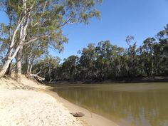 Murray River Sand Bar