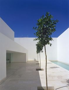 View of the patio of the Casa Guerrero by Estudio Campo Baeza. Abstracted nature within the safe confines of the house.