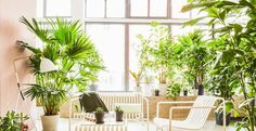 Viel Stil und viel Grün - Pflanzenfreude.de