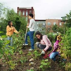Start a Community Garden! In this article, youll learn what it takes to start a community garden -- from how to secure a site and raise money to how to organize the planting process. This is a great way to educate kids and get them involved in volunteer p Starting A Vegetable Garden, Home Vegetable Garden, Gardening Courses, Gardening Tips, Hydroponic Gardening, Best Garden Tools, Landscape Photography Tips, Landscape Photographers, Hardy Plants