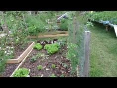 Basic Methods for Trellising Spring and Fall Peas: Two Seasons! - The Rusted Garden 2013