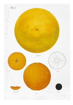 Donald Sultan 'Orange Feb 27 1996', 1996 © Donald Sultan, gift of the artist and Tyler Graphics Ltd