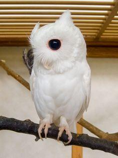 animales-blancos (10)