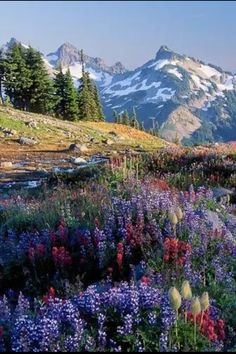 Yellowstone - I want to go!