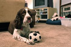 10 Best Toys For Dogs With No Teeth - if your dog has no teeth, or few teeth, these are worth considering