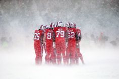 A Buffalo herd huddles together in the blowing snow and wind. (The Buffalo Bills offense strategizes on the field during the third quarter against the Indianapolis Colts at New Era Field in Orchard Park, New York, on December 10, 2017.)