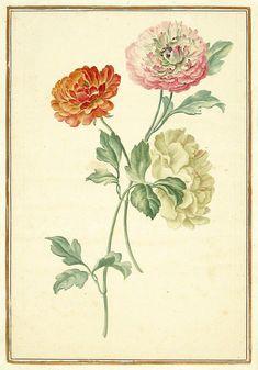 Karlsruher Tulpenbuch - Antique botanical illustration.