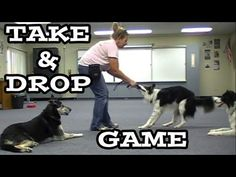 Take and Drop Game - Clicker Dog Training #dogs #dogtraining