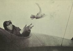 (Courtesy of The Great War Primary Documents Archive www.gwpda.org) Un soldado suelta una paloma mensajera desde su avión en 1919. (Birds and the War, Skeffington & Son, London, 1919)