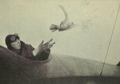 (Courtesy of The Great War Primary Documents Archive www.gwpda.org) Un soldado suelta una paloma mensajera desde su avión en 1919. (Birds and the War, Skeffington & Son, London, 1919)