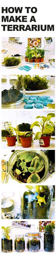 How to build your own terrarium!