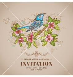 Spring bird -vintage card - hand-drawn vector by woodhouse84 on VectorStock®