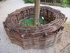 willow tree bench (Uzes, France)
