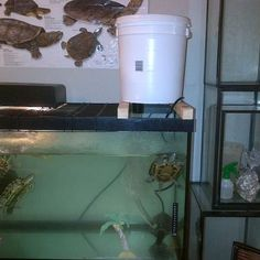 Turtle Tanks on Pinterest Turtle Habitat, Red Eared Slider and ...