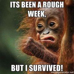 Orangutan Survive - Its been a rough week, But i survived!