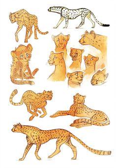 Cheetah sketches by Drkav on DeviantArt Big Cats Art, Furry Art, Cat Art, Animal Sketches, Animal Drawings, Art Sketches, Cheetah Drawing, Cat Drawing, Sketch Style