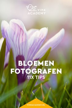 Bloemen fotograferen: 11 tips • Vink Academy Beautiful Flowers Pictures, Flower Pictures, Studio Setup, Photography Tips, Photoshop, Herbs, Creative, Plants, Photographers