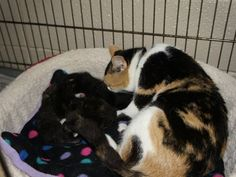 Mama and her six kittens -- saved!