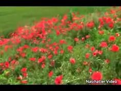 Ey Oğul Rahmetli Haluk Kurdoğlu'nun sesinden bir babanın evladına nasihatlerini video eşliğinde seyredebilirsiniz.