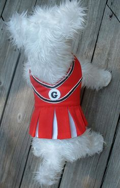 Dog Cheer Leader Dress----Dog Costume-------Dog Clothes-------Halloween-------Canine Clothes-------GO TEAM. $30.00, via Etsy.