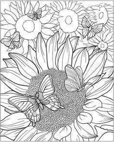 Amazon Really RELAXING Colouring Book 3 Botanicals In Bloom A