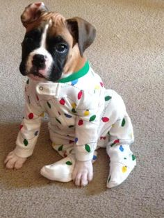 This pupper, who got into the holiday spirit before sleep. | 21 Cats And Dogs Who Are So Ready For Bedtime #boxerpuppy
