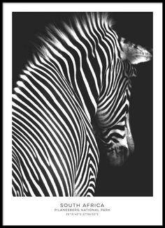 Zebra black, poster ryhmässä Julisteet  / Koot / 30x40 cm @ Desenio AB (8351)
