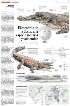 The shoreline crocodile