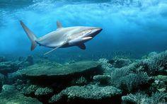 Ocean Animals - animals Wallpaper