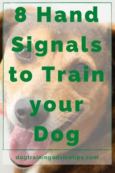 8 Hand Signals to Train your Dog. #dogtrainingadvicetips #dogbehavior #dogtraining #dogobedience #dogtrainingtips #dogtips #dogtraininghandsignals #dogs #dogtrainingbasic Puppy Care, Dog Care, Dog Body Language, Hand Signals, Healthy Pets, Dog Hacks, Labrador Retriever Dog, Bull Terrier Dog, Dog Boarding