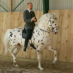 Bent Branderup and his horse Hugin. Hugins is a 21 year old, totally blind knapstrupper.
