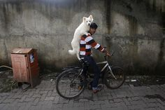 A man rides a bicycle as he carries his dog on his shoulders in Mumbai July (Photo by Danish Siddiqui/Reuters) Mumbai, Funny Images, Funny Photos, Bushcraft Backpack, Animal Tracks, Cat Stands, Spiegel Online, Afghanistan War, Weird Pictures
