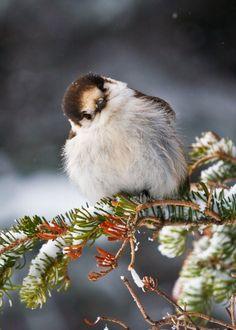 Sweet bird.