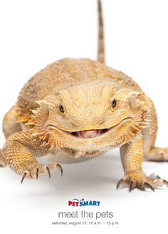 Hi, I'm Roxy. I really like to be warm. Give me a branch to sit on and I'm happy! I love eating crickets and banana slices. Hope I see you at PetSmart!