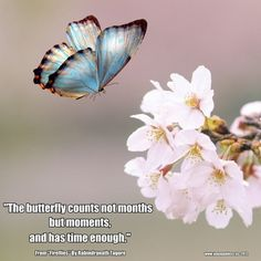 """The Butterfly Counts Not Months But Moments, And Has Time Enough"" – Rabindranath Tagore 