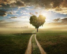 Estradas árvores Nuvem Coração Nevoeiro Grama Naturaleza