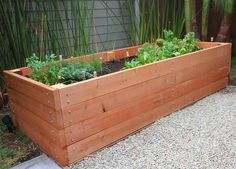 redwood-garden-planter-box.jpg 700×502 pixels