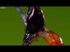 Kung Fu Mantis Vs Jumping Spider | Life Story - YouTube