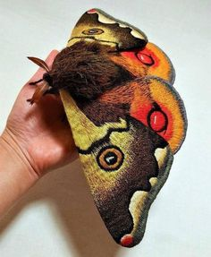 Cool Insects, Bugs And Insects, Beautiful Bugs, Beautiful Butterflies, Beautiful Creatures, Animals Beautiful, Animals And Pets, Cute Animals, Emperor Moth