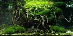 Layout par Kirua. #aquascaping #fish #aquarium
