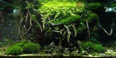 Layout par Kirua. #aquascaping #fish #aquarium